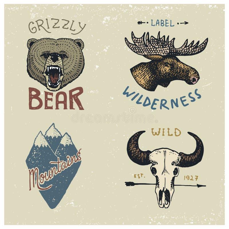 Sistema de vintage grabado, mano dibujada, vieja, etiquetas o insignias para acampar, el caminar, cazando con la cara de los alce libre illustration