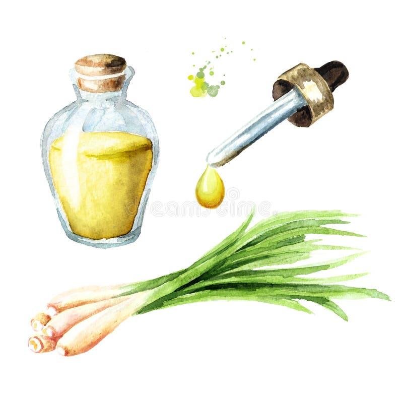 Sistema del aceite esencial del Cymbopogon Concepto del balneario Ejemplo dibujado mano de la acuarela, aislado en el fondo blanc ilustración del vector