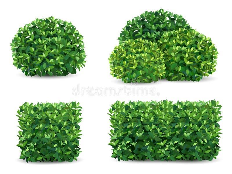 Sistema del arbusto del vector stock de ilustración