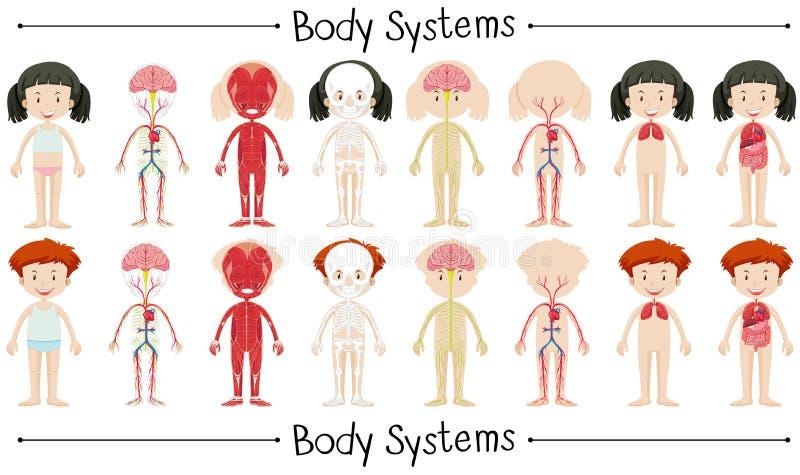 Sistema del corpo del ragazzo e della ragazza illustrazione di stock