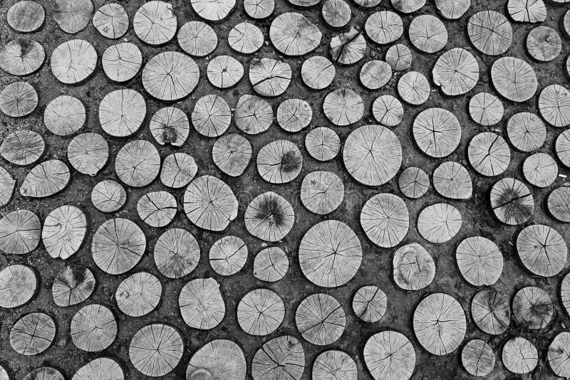 Sistema del corte redondo de los tocones de árbol con los anillos anuales imagen de archivo