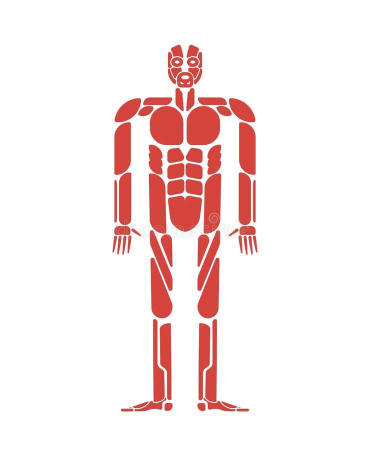 Sistema Del Cuerpo Humano Del Sistema De Músculos Anatomía