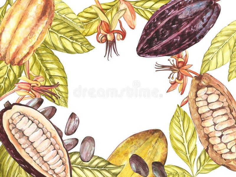 Sistema del ejemplo botánico Colección de la fruta del cacao de la acuarela aislada en el fondo blanco Cacao exótico dibujado man libre illustration