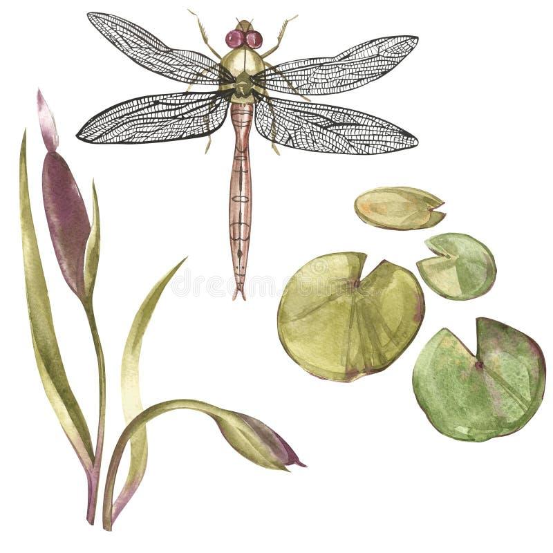 Sistema del ejemplo botánico dibujado mano de la acuarela del tema del pantano Elemento para el diseño de invitaciones, carteles  libre illustration