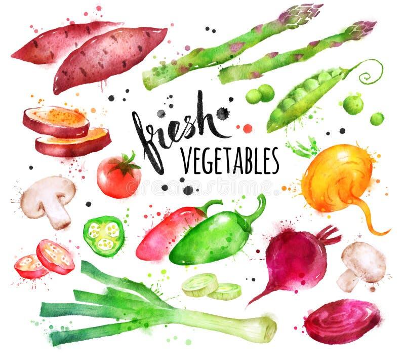 Sistema del ejemplo de la acuarela de verduras frescas stock de ilustración