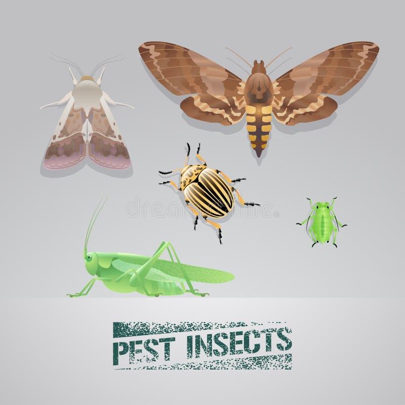 Sistema del ejemplo realista del vector de insectos del parásito libre illustration