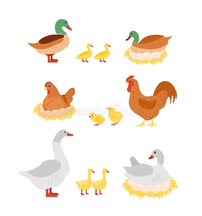 Sistema del ejemplo del vector de aves de corral Gallina, gallo, pato y ganso, pollo en los huevos en las jerarquías en diseño pl ilustración del vector