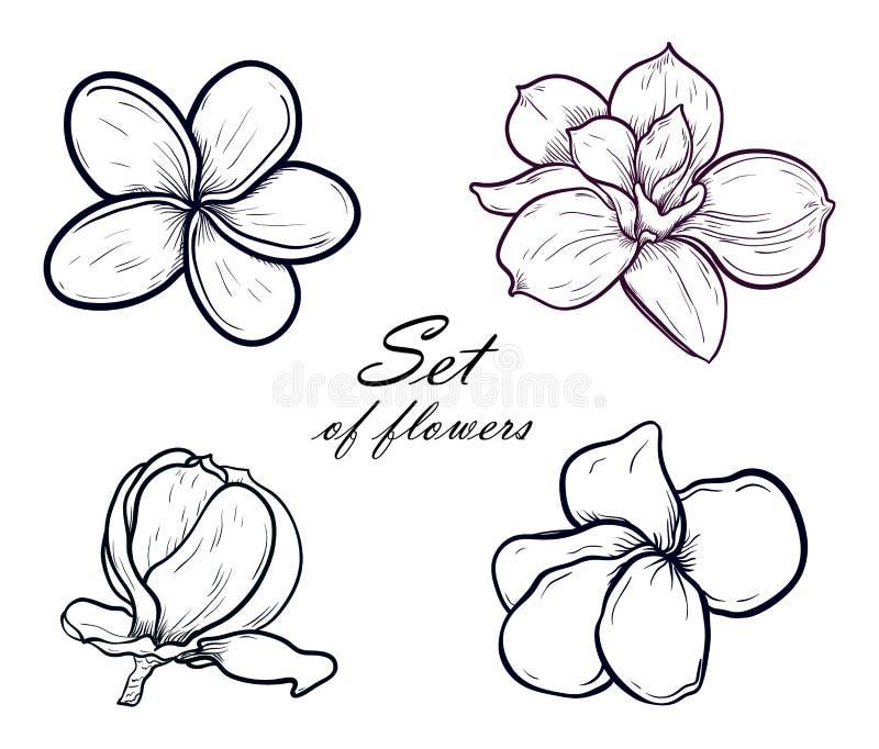 Sistema del ejemplo del vector de magnolia hermosa y de plumeria, flores de dibujo de la primavera aisladas en el fondo blanco stock de ilustración