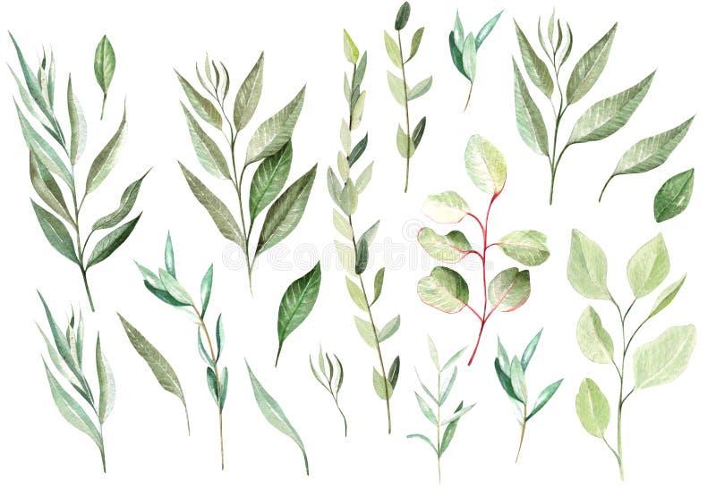 Sistema del eucalipto de la acuarela Elementos pintados a mano del eucalipto del bebé, sembrado y de plata del dólar stock de ilustración