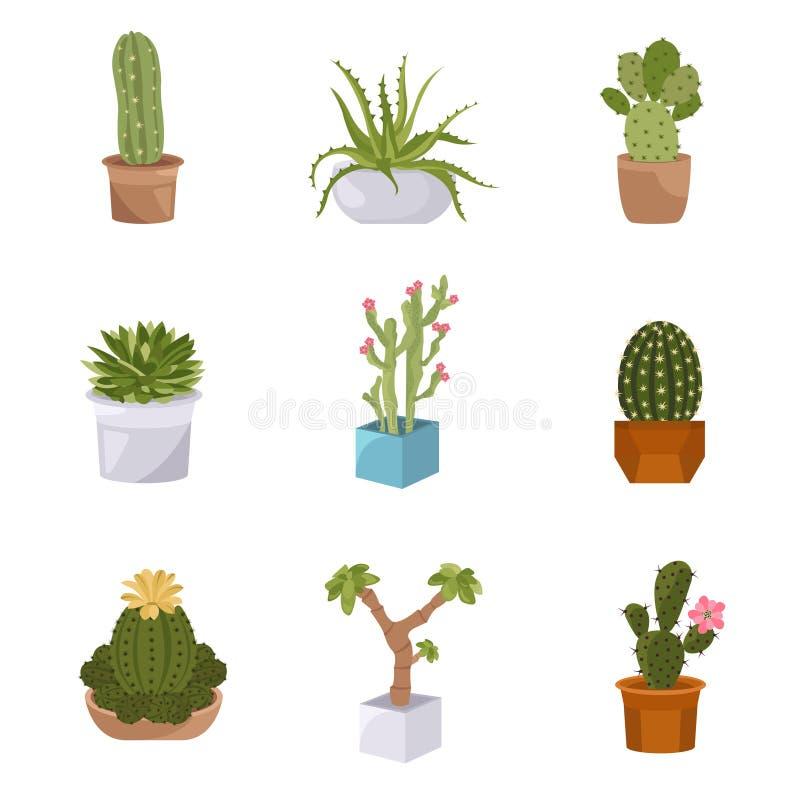 Sistema del icono de los cactus y de los succulents Houseplants ilustración del vector