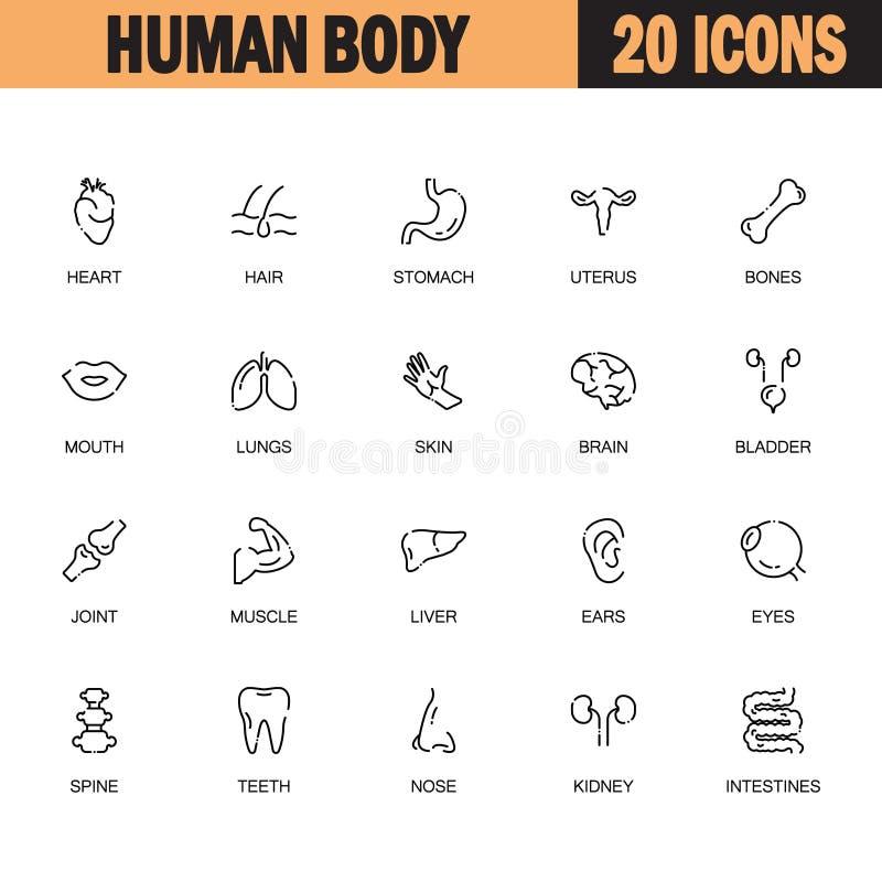 Sistema del icono del cuerpo humano stock de ilustración