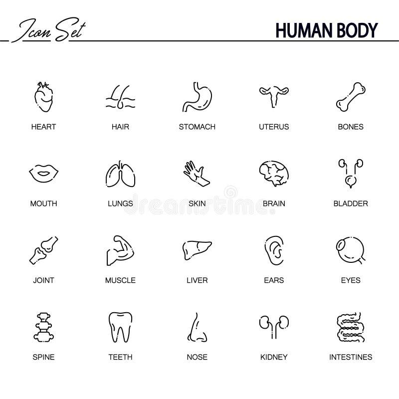 Sistema del icono del cuerpo humano ilustración del vector
