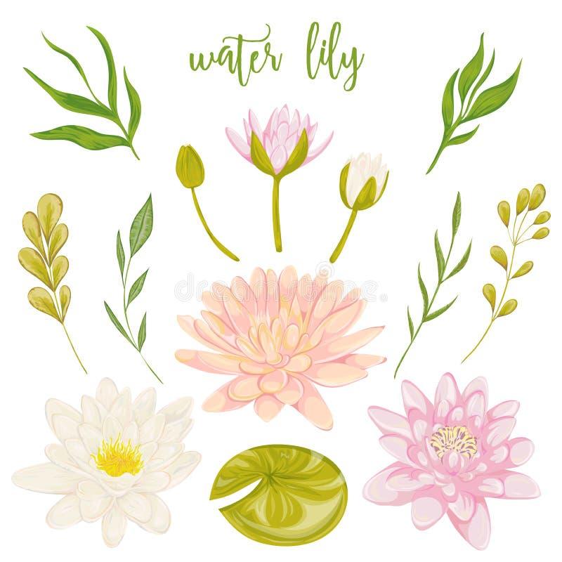 Sistema del lirio de agua Elementos decorativos florales del diseño de la colección para casarse invitaciones y tarjetas de cumpl stock de ilustración