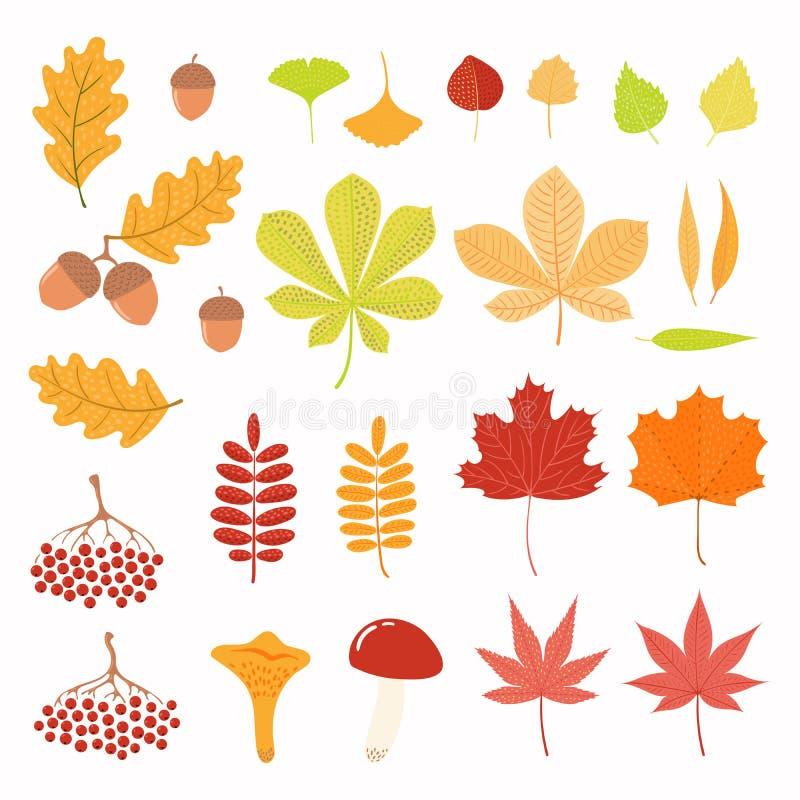 Sistema del otoño con las hojas, bayas, setas stock de ilustración