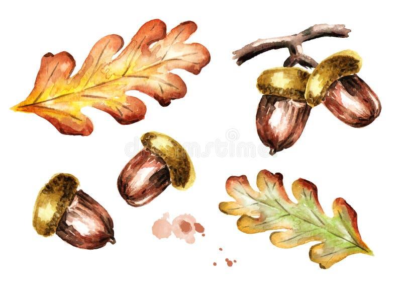 Sistema del otoño del roble con las hojas y las bellotas Ilustración de la acuarela libre illustration