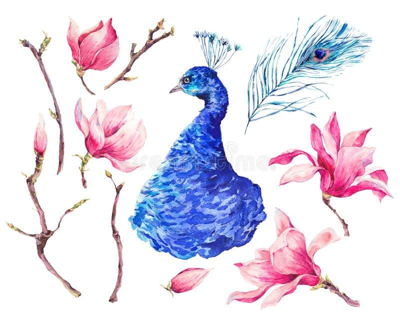 Sistema del pavo real de la acuarela, magnolia de las flores libre illustration