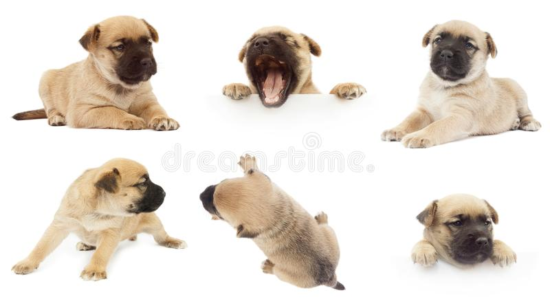 Sistema del pequeño perro o perrito lindo fotografía de archivo