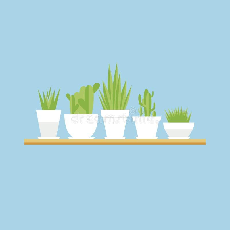 Sistema del plano de los houseplants del vector ilustración del vector