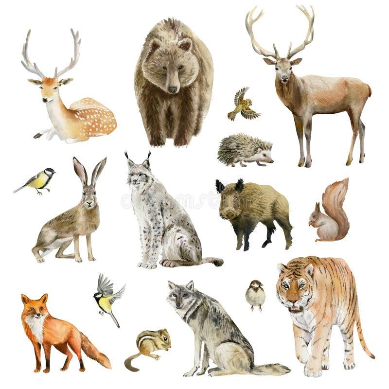 Sistema del tablero de cliparts animales dibujados mano de la acuarela stock de ilustración