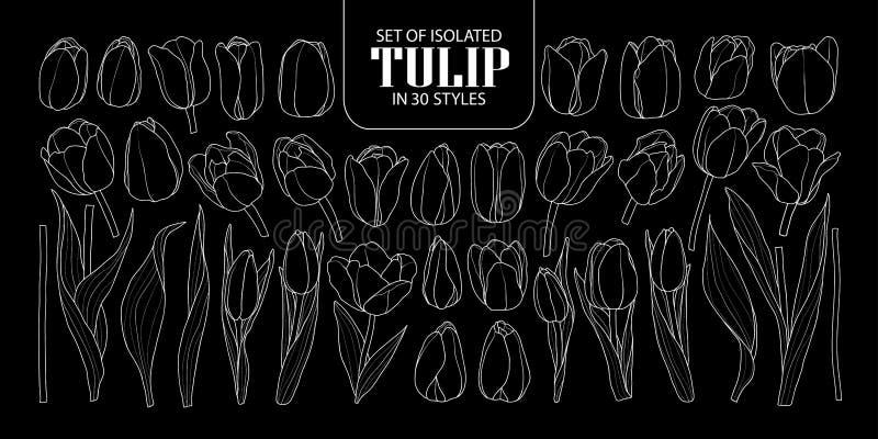 Sistema del tulipán aislado en 30 estilos Vecto dibujado mano linda de la flor libre illustration