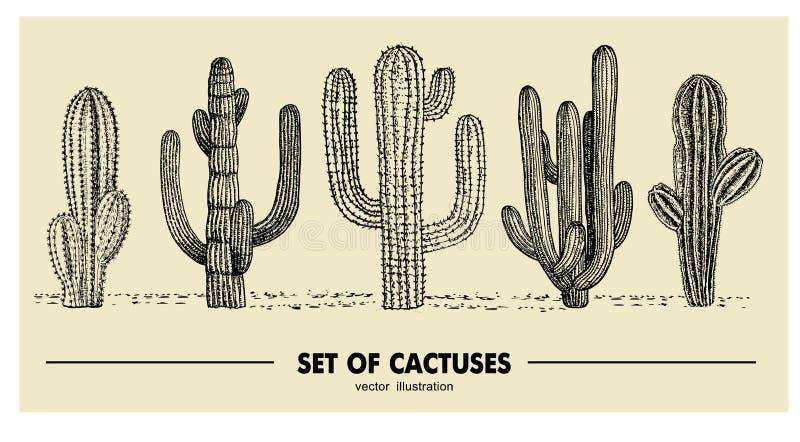 Sistema del vector del cactus dibujado mano Ejemplo del bosquejo Diversos cactus en estilo monocromático stock de ilustración