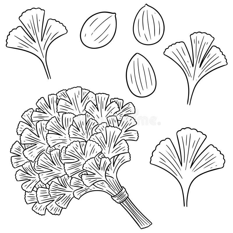 Sistema del vector de coriandro stock de ilustración
