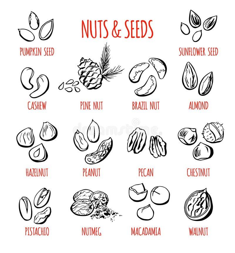 Sistema del vector de ejemplos de las nueces y de las semillas stock de ilustración