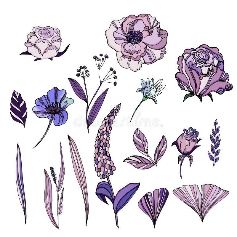 Sistema del vector de flores dibujadas mano linda Rosas, violetas, Ranunculu libre illustration