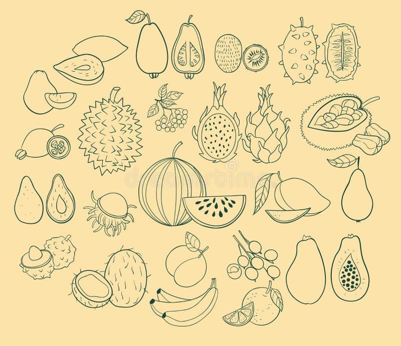 Sistema del vector de frutas exóticas stock de ilustración