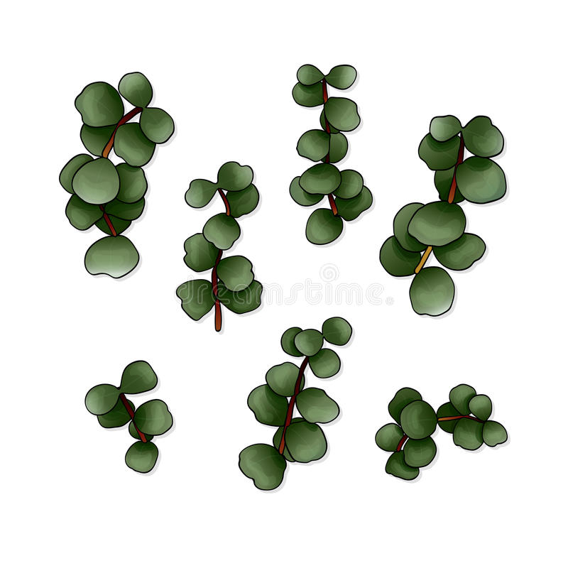 Sistema del vector de hojas del eucalipto libre illustration