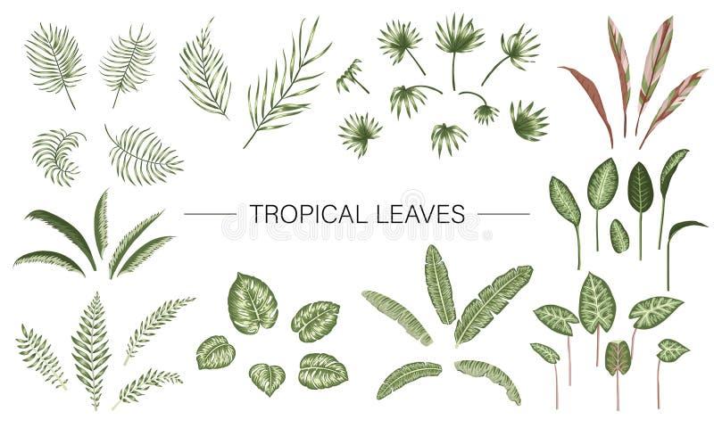 Sistema del vector de hojas de la planta tropical Colección del follaje de la selva stock de ilustración