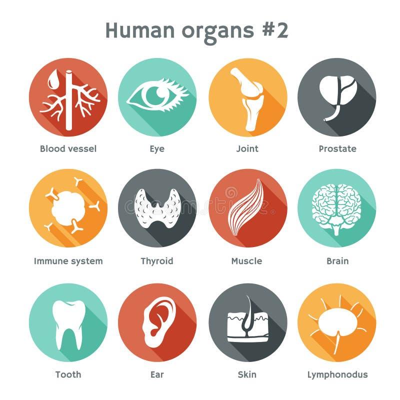 Sistema del vector de iconos planos con los órganos humanos ilustración del vector