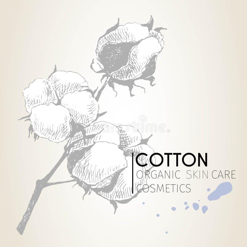 Sistema del vector de ingredientes del cuidado de piel Elementos dibujados mano orgánica Rama del algodón ilustración del vector