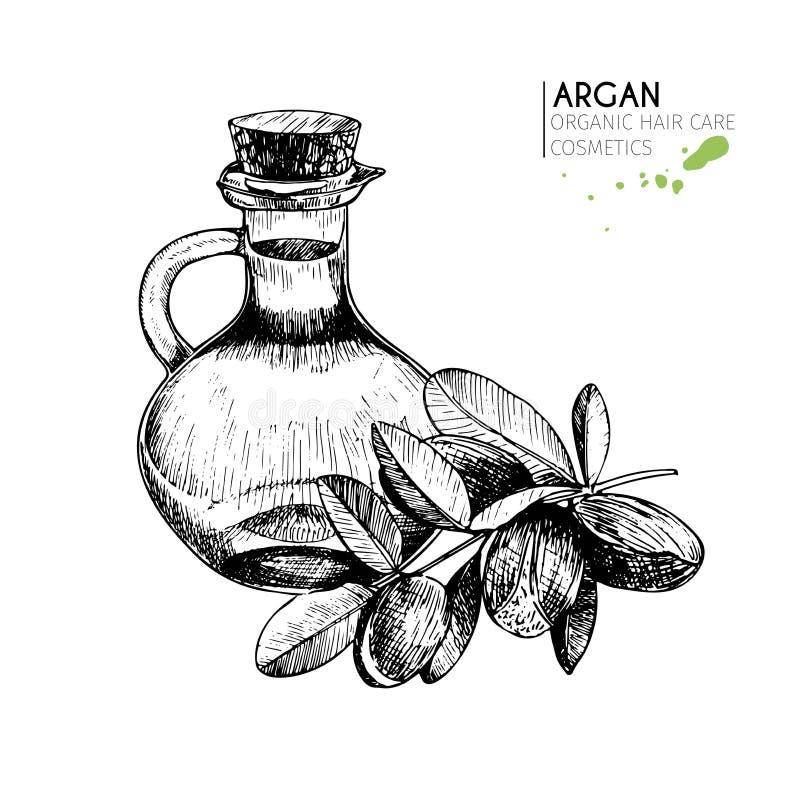 Sistema del vector de ingredientes del cuidado del cabello Elementos dibujados mano orgánica Nueces del Argan y botella de aceite libre illustration