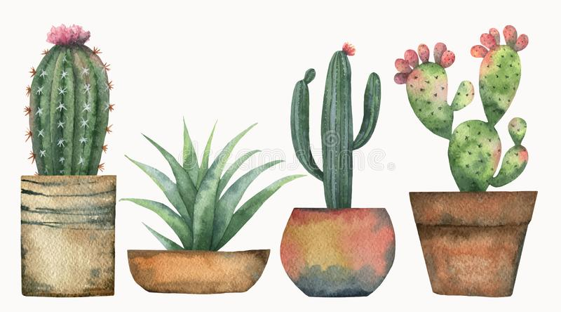 Sistema del vector de la acuarela de cactus y de plantas suculentas aislados en el fondo blanco ilustración del vector