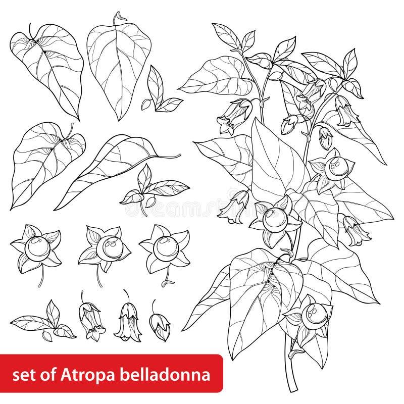 Sistema del vector de la belladona del Atropa del esquema o del manojo tóxico de la flor del nightshade mortal, del brote, de la  ilustración del vector