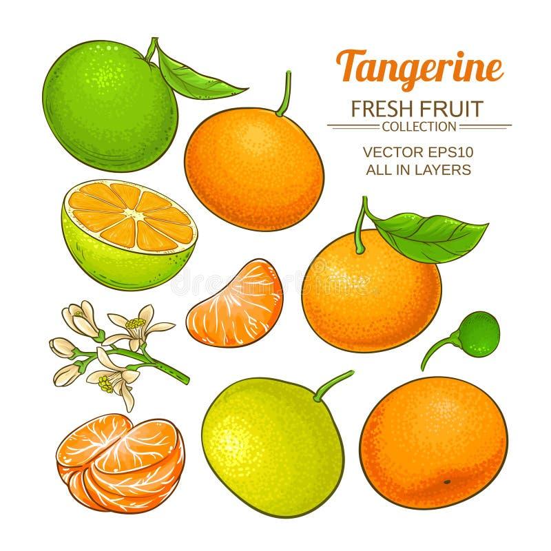 Sistema del vector de la fruta de la mandarina libre illustration
