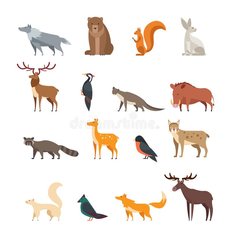 Sistema del vector de la historieta de los animales salvajes y de los pájaros del bosque aislado Ciervos planos, oso, conejo, ard stock de ilustración