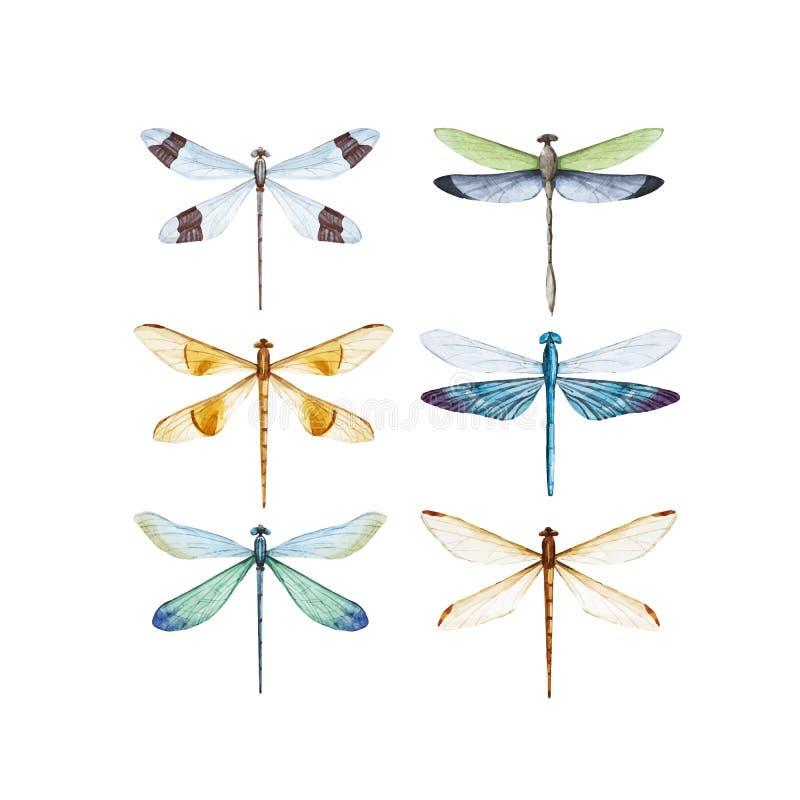 Sistema del vector de la libélula de la acuarela stock de ilustración