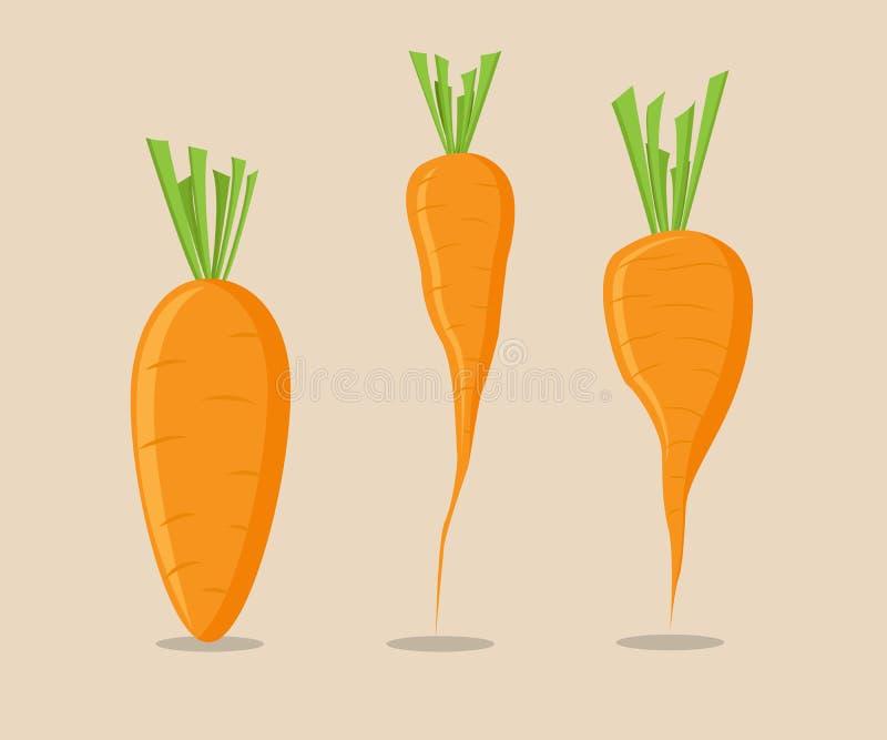 Sistema del vector de la zanahoria libre illustration