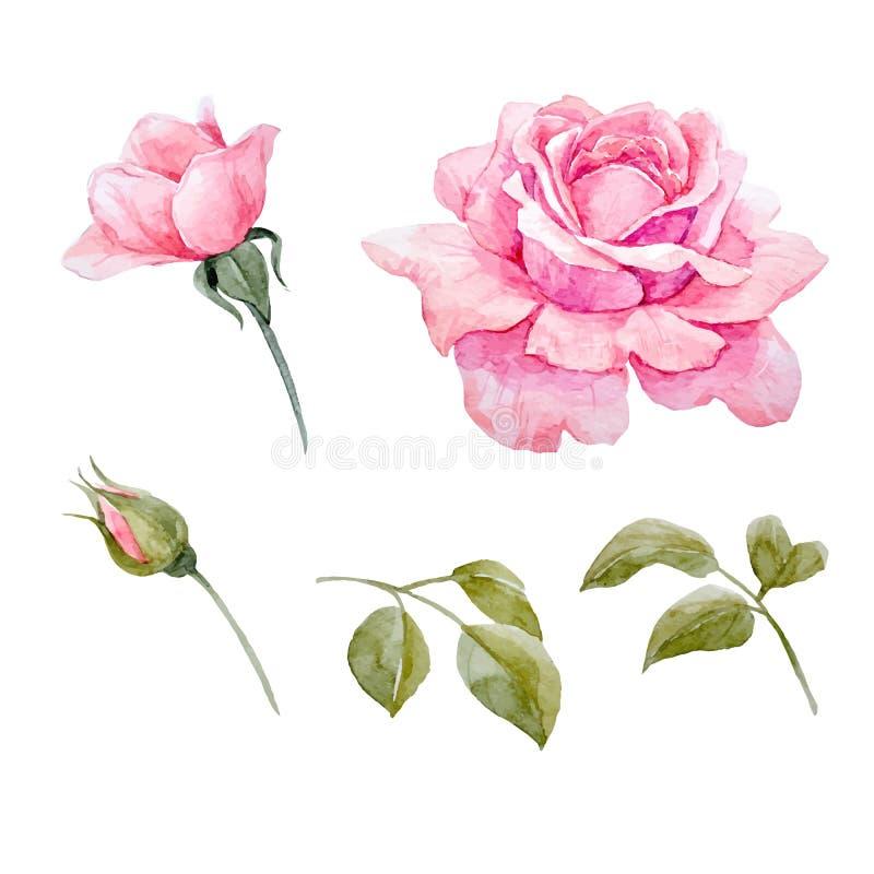 Sistema del vector de las rosas de la acuarela ilustración del vector