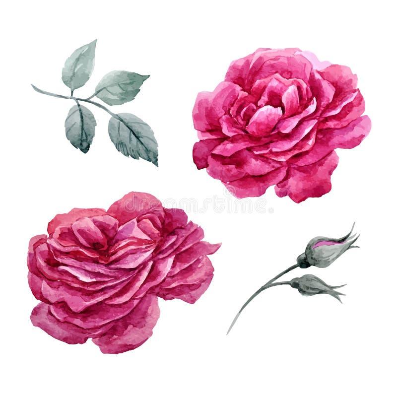 Sistema del vector de las rosas de la acuarela libre illustration