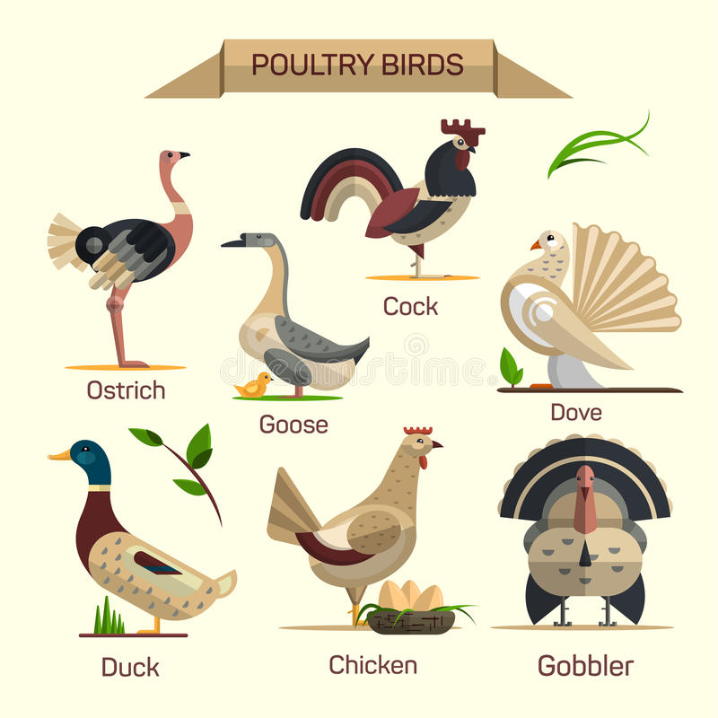 Sistema del vector de los pájaros de la granja en diseño plano del estilo ilustración del vector