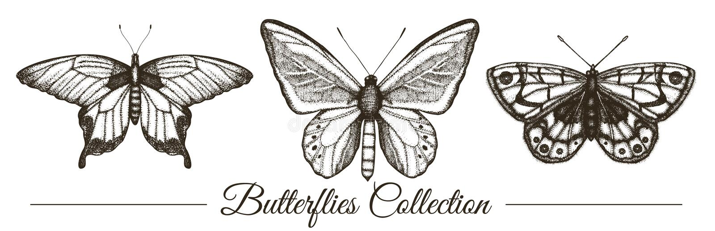 Sistema del vector de mariposas blancos y negros exhaustas de la mano ilustración del vector