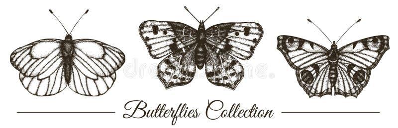 Sistema del vector de mariposas blancos y negros exhaustas de la mano stock de ilustración