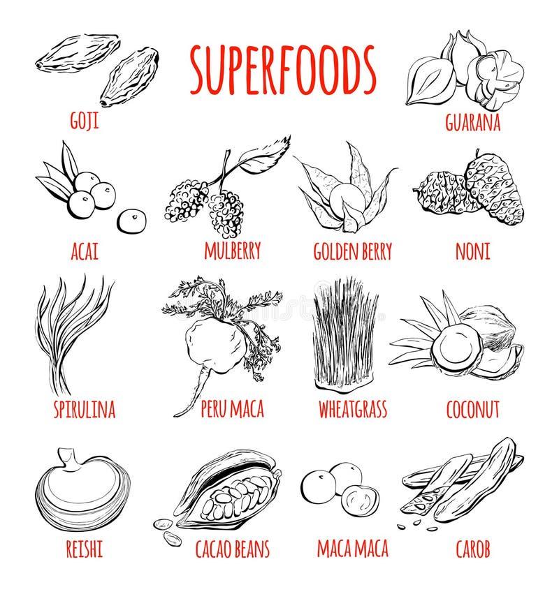 Sistema del vector de objetos dibujados mano de superfoods ilustración del vector