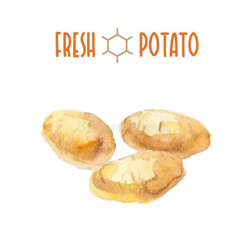Sistema del vector de patatas de la acuarela libre illustration