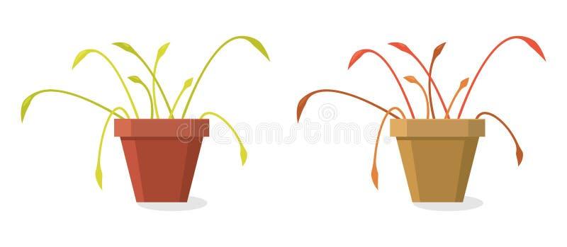 Sistema del vector de plantas caseras de muerte ilustración del vector