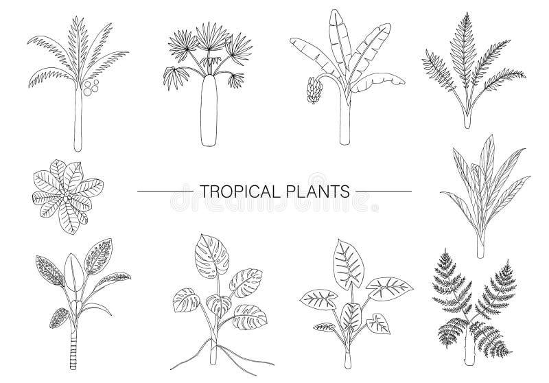 Sistema del vector de plantas tropicales Dibujo lineal del follaje de la selva Palmera exhausta de la mano, plátano, monstera, di ilustración del vector