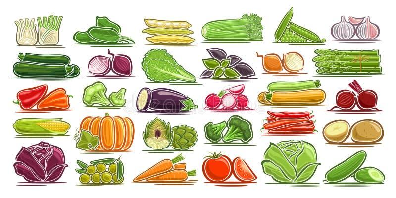 Sistema del vector de verduras frescas libre illustration